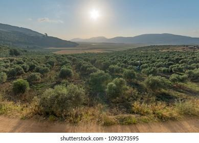Landscape and countryside in the Netofa valley in the lower Galilee, northern Israel