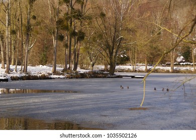 Landscape covered with snow in forest, around a lake ice-cold and covered with hoarfrost. The water is icy, but there is in spite of all ducks and birds in this icy water.