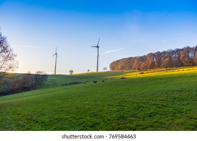 landscape cows grazing and eating grass on field hill edge of forest and two tall wind turbines to produce clean alternative renewable engergy sun setting on horizon