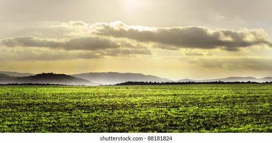 Landscape with cultived green field at sunset