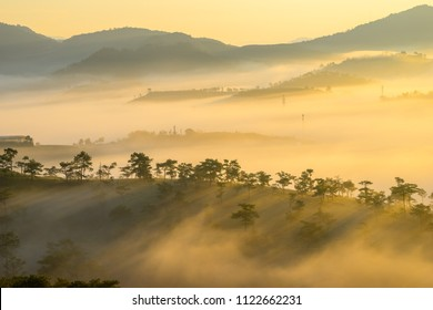 Landscape Dalat, the pine hill and valley in fog, the sunrise on top of moutain, the light shine throught pines tree