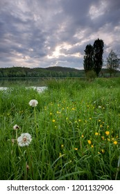 Landscape with dandylions and wild yellow flowers