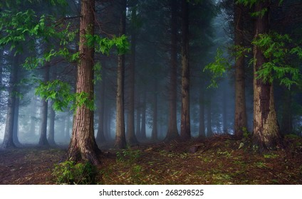 landscape of dark forest with fog