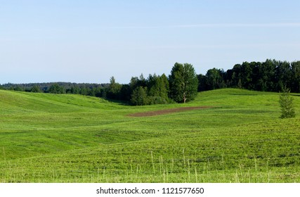 a landscape at dawn on a field with green grass and trees, illuminated by sunlight, in the center of the field does not grow grass and visible soil