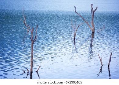 landscape of dead tree in the lake