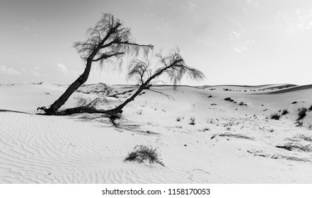 Landscape of a dead tree on a desert dune in artistic conversion