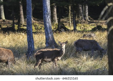 landscape and deer at the evening sun