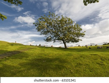 Landscape in denmark with green grass, blue sky and big tree