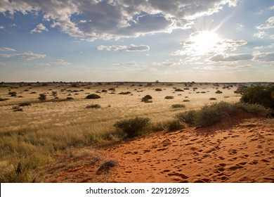 Landscape of desert and grassland, Namibia