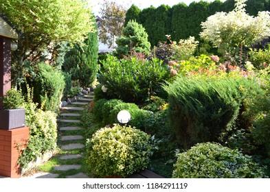 Landscape design, beautiful plants bushes, flowers and trees