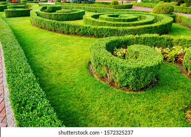 landscape design of a hedge of boxwood bushes growing with patterns in the backyard with green lawn and flowers on a summer day.