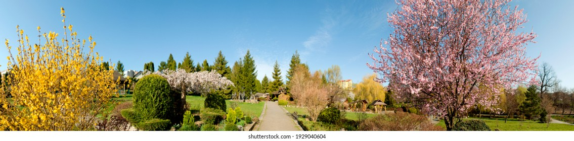 Landscape design of luxury home garden. Picturesque view of the landscaped garden in the yard. Landscape design with plants and flowers in a private area. Natural space scenery space in summer