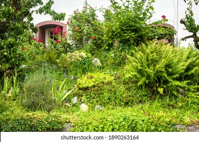 Landscape design with stones, plants and flowers at residential house, nice landscaping home garden. Scenic view of beautiful landscaped backyard or front yard, green facade in summer.
