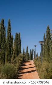 landscape with dirt path and cypresses