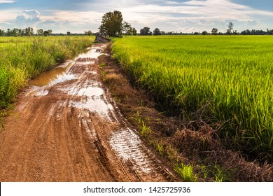 Landscape of dirt road after rain in the rice field, countryside and rainy season in Thailand