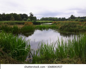 Landscape with ditches, water plants, trees and a cloudy sky. Peat area in The Green Heart of The Netherlands.