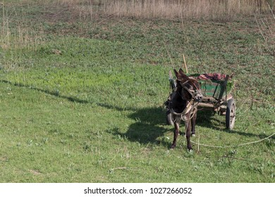 Landscape with a donkey. A donkey with a load moves across the field on a summer day.