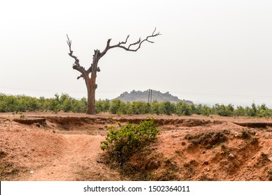 Landscape with dry lone bare tree in Dry hilly Semi-arid area of Chota Nagpur plateau of Jharkhand India. Land degradation happen due to climate change, which effects agricultural productivit.