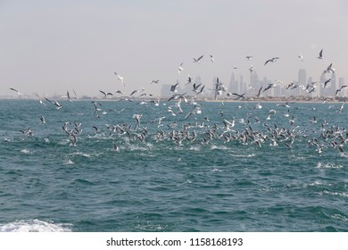 Landscape of Dubai city skyline with birds catching fish in the sea