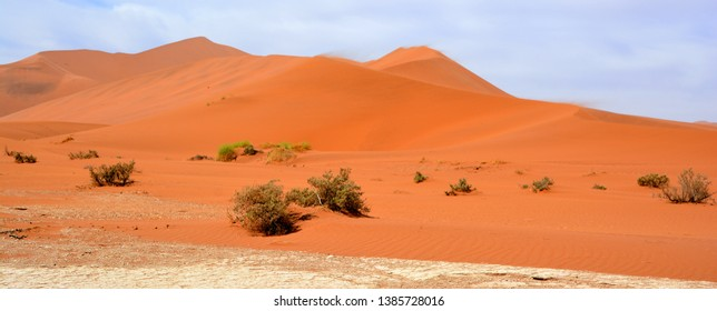 Namib Images Stock Photos Vectors Shutterstock