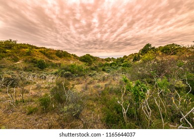 Landscape with dunes and wild nature during sunset in the national park Meijendel at the Dutch coast