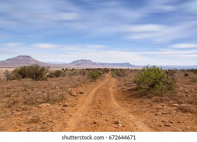 A landscape from the Eastern Cape savanna, South Africa
