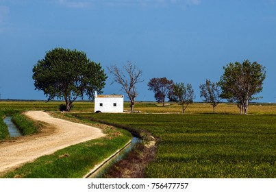 Landscape of the Ebro river delta in Catalonia, Spain. Unpaved road surrounded by small watercourses. Typical painted white house. Trees and crops in the background. Shooting of August 24, 2017 16:35