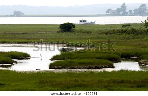landscape with an egret