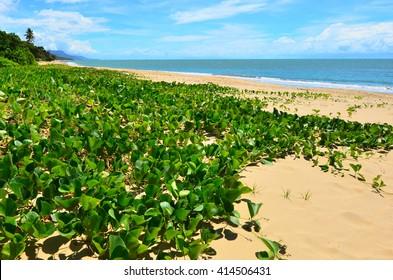 Landscape of Ellis beach near Cairns in Tropical North Queensland, Queensland, Australia.