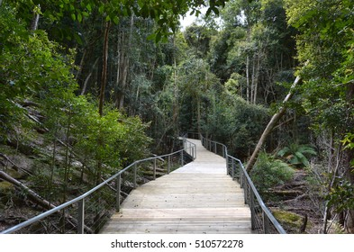 Landscape of an empty path in the rainforest of Jamison Valley Blue Mountains New South Wales Australia