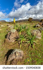 Landscape of the Ethiopian Bale Mountains National Park. Ethiopia wilderness pure nature with flower of Kniphofia foliosa.