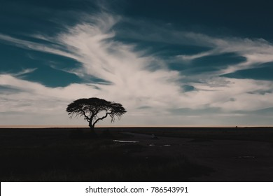 Landscape of Etosha National Park, with a beautiful acacia tree silhouette at sunset. Namibia.