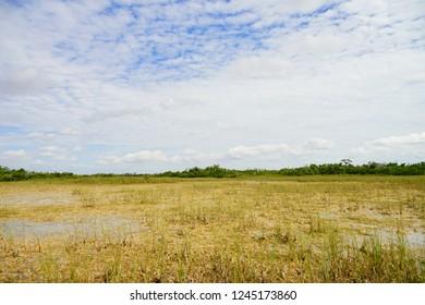 landscape of everglades national park