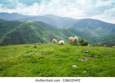 Landscape from Ezcaray to Valdezcaray in La Rioja Spain Sheeps on mountain