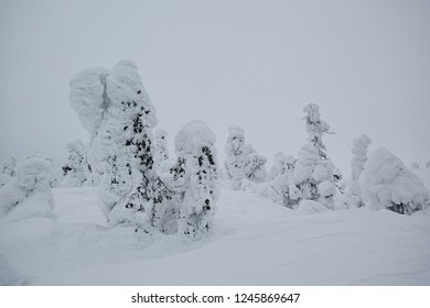 The landscape with a fabulous winter fir forest is covered with a lot of snow after a snowstorm, in cloudy weather. The branches hang down from gravity.