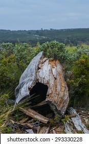 landscape with falling dead tree stump