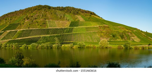 Landscape with famous green terraced vineyards in Mosel river valley, Germany, production of quality white and red wine, riesling