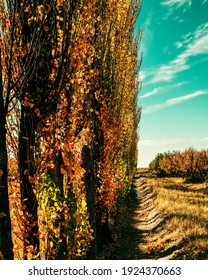 landscape of a farm with its plantations in the autumn season in the province of mendoza Argentina