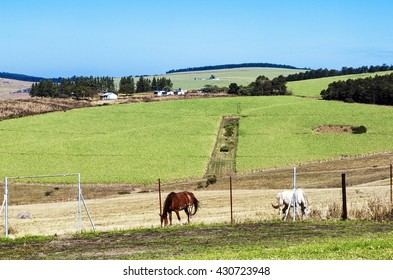 Landscape farm view of horses and sugar cane plantation and blue sky in South Africa