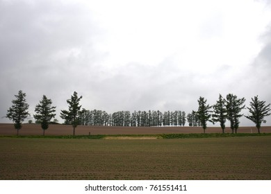 Landscape with farming field and a lot of pine tree in the line