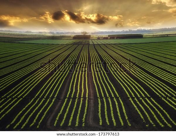 Paysage avec champ et beau ciel au lever du soleil
