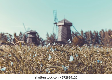 Landscape with a field of flax and wooden windmills