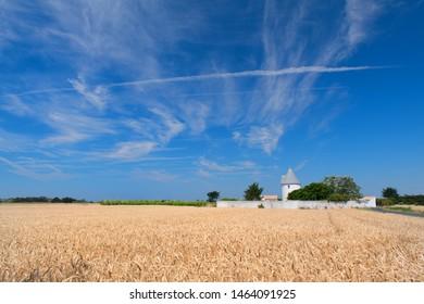 Landscape field with grain and village Ile de Re