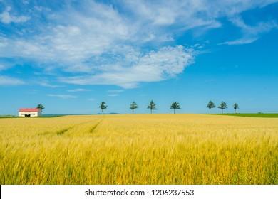 Landscape of a field in Hokkaido's idyllic Ohori Town Landscape of fairy tale hill in Okoro-cho, Hokkaido