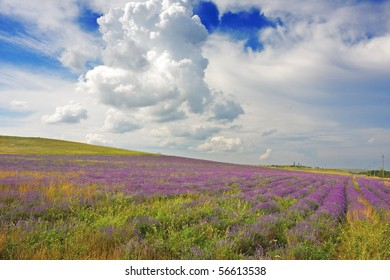 landscape with field of lavender
