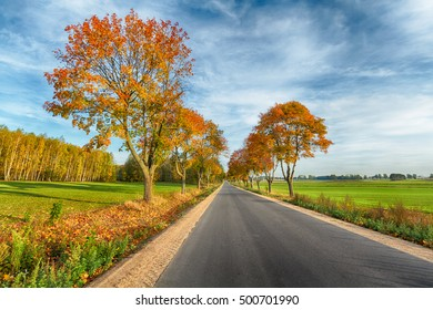 Landscape - field road with amazing autumn colors. White clouds and blue sky. Sunny day.