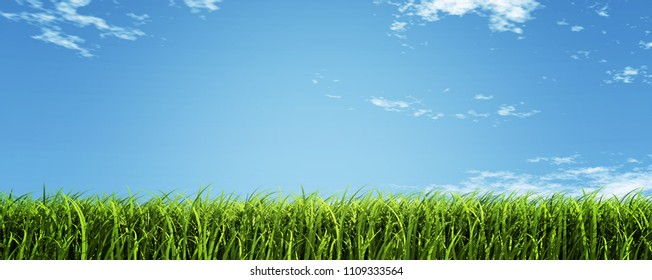 Landscape field and sky