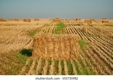 Landscape with a field of straw rolls.