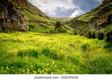 Landscape of a field of yellow flowers at sunset in Ayacucho - Peru