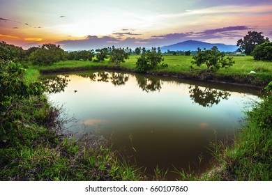 Landscape of fish pond with longan tree at evening time